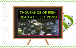 Fish Deaths at Fleet Pond
