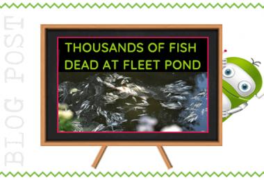 Fish Deaths at Fleet Pond