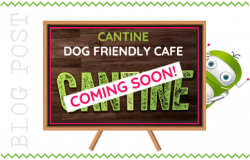 Cantine - Dog Friendly Cafe to Open in Fleet